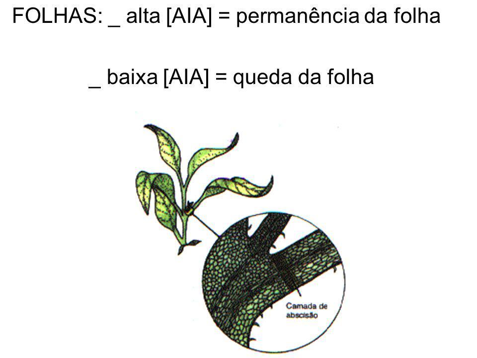 FOLHAS: _ alta [AIA] = permanência da folha